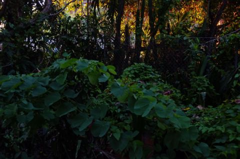 Evening light through trees 1