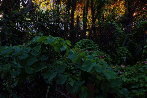 Evening light through trees 1