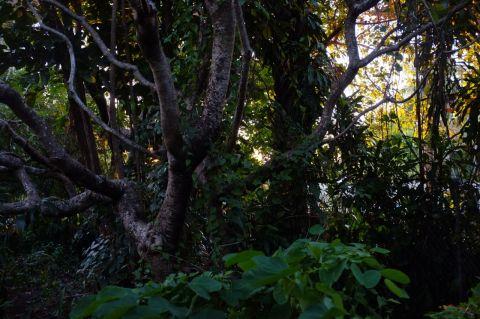 Evening light through trees 2