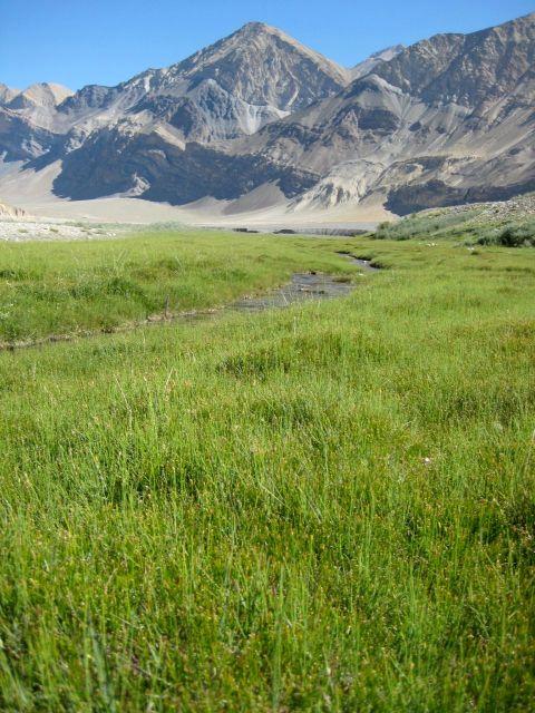 the glacial stream